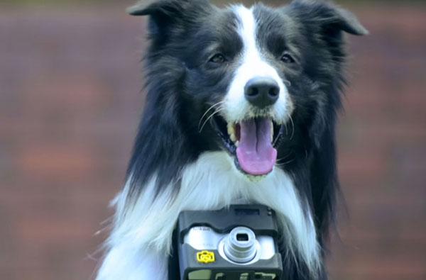 Nikon Doggy Camera