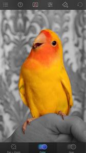 Color Splash, filtri fotografici