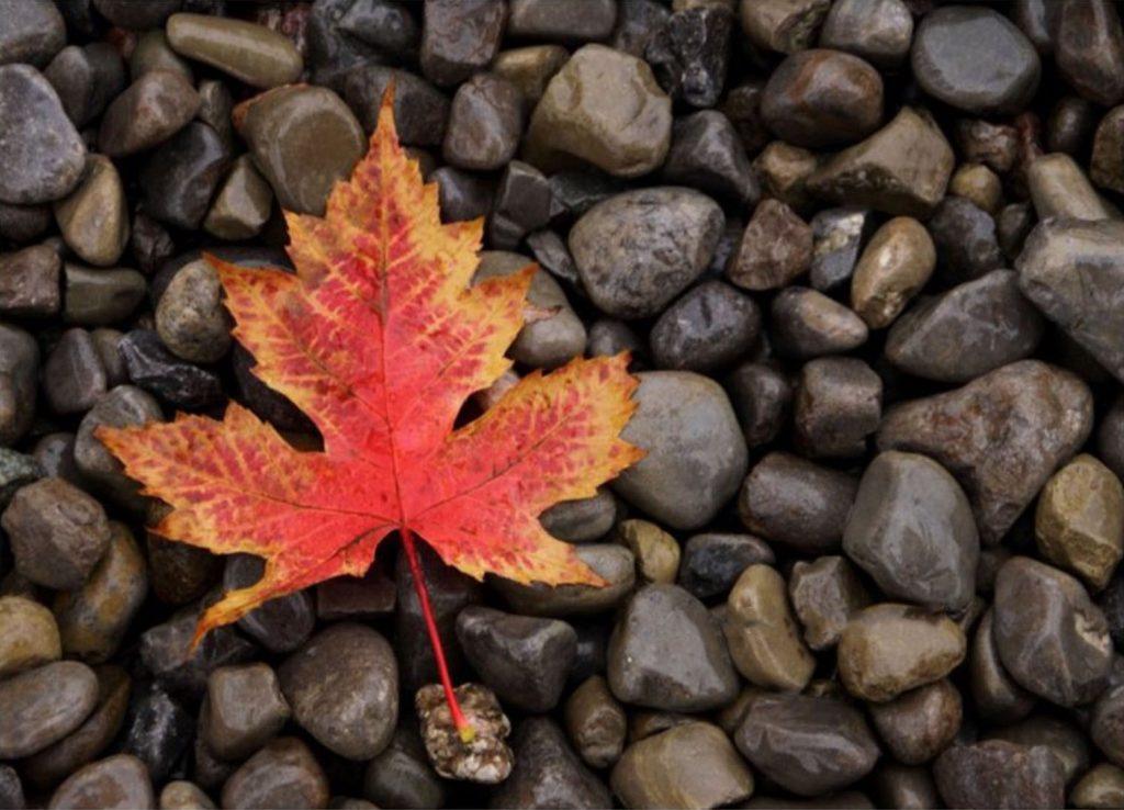 fotografiaindigitale.myshopify.com