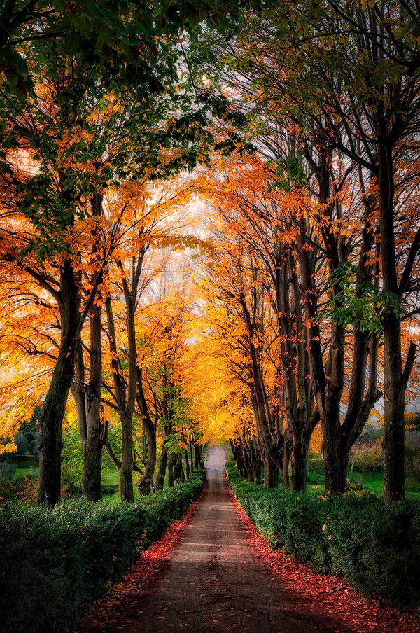 il foliage d'autunno