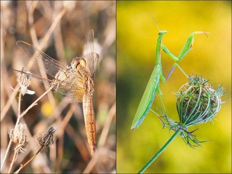 Fotografia macro, Tecnica fotografica, sfondo copia