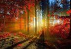 come fotografare l'autunno, tecnica fotografica